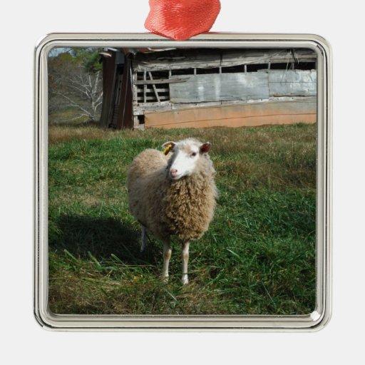 Ovejas blancas jovenes en la granja adorno navideño cuadrado de metal