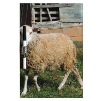 Ovejas blancas jovenes en la granja pizarras blancas de calidad