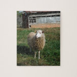 Ovejas blancas jovenes en la granja rompecabeza con fotos