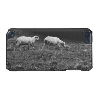 Ovejas blancos y negros en una foto del pasto funda para iPod touch 5