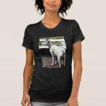ovejas camisetas