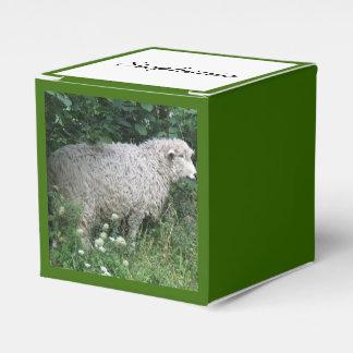 Ovejas codiciosas lindas que comen la caja de cajas para detalles de boda