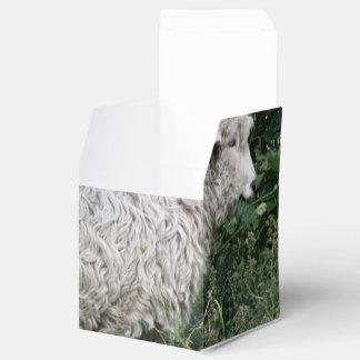 Ovejas codiciosas lindas que comen la caja del caja para regalo de boda