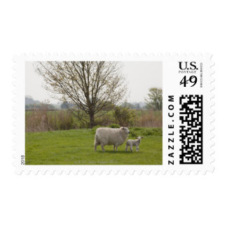 Ovejas con el cordero en campo sello postal