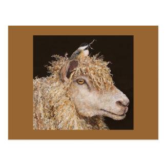ovejas con la postal del chickadee