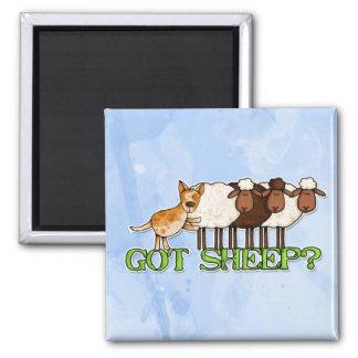 ovejas conseguidas imán para frigorífico