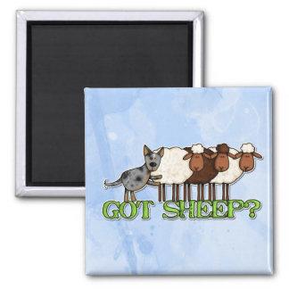 ovejas conseguidas imán cuadrado