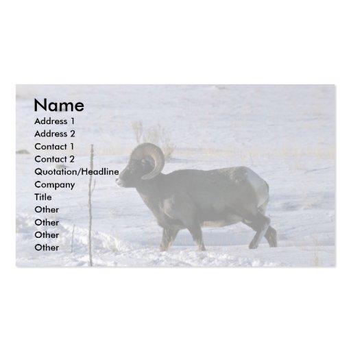 Ovejas de Bighorn (espolón adulto) Tarjetas Personales