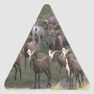 Ovejas de Bighorn jovenes Pegatina Triangular