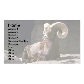 Ovejas de carnero con grandes cuernos del desierto tarjetas de visita