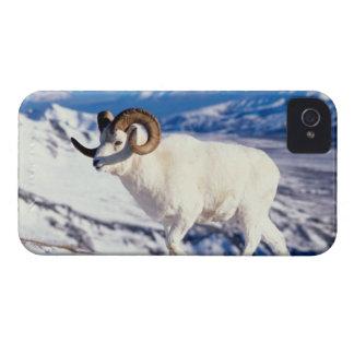 ovejas de dall, dalli del Ovis, espolón lleno del Case-Mate iPhone 4 Cárcasas