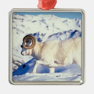 ovejas de dall dalli del Ovis espolón lleno del Ornamentos Para Reyes Magos