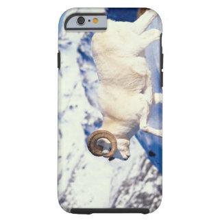 ovejas de dall, dalli del Ovis, espolón lleno del Funda De iPhone 6 Tough