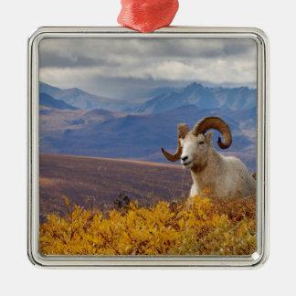 ovejas de dall dalli del Ovis espolón que descan Adorno Para Reyes