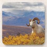 ovejas de dall, dalli del Ovis, espolón que descan Posavasos