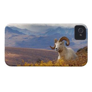 ovejas de dall, dalli del Ovis, espolón que iPhone 4 Case-Mate Coberturas