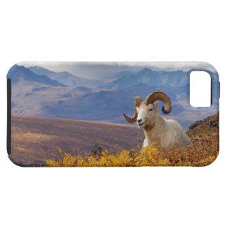 ovejas de dall, dalli del Ovis, espolón que iPhone 5 Fundas
