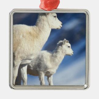ovejas de dall dalli del Ovis oveja y cordero en Ornamento Para Reyes Magos