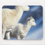 ovejas de dall, dalli del Ovis, oveja y cordero en Mouse Pads