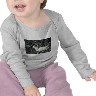 Ovejas de Dall (espolón grande acostado abajo) Camisetas