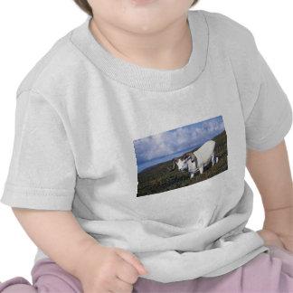 Ovejas de Dall (espolón grande que pasta) Camisetas