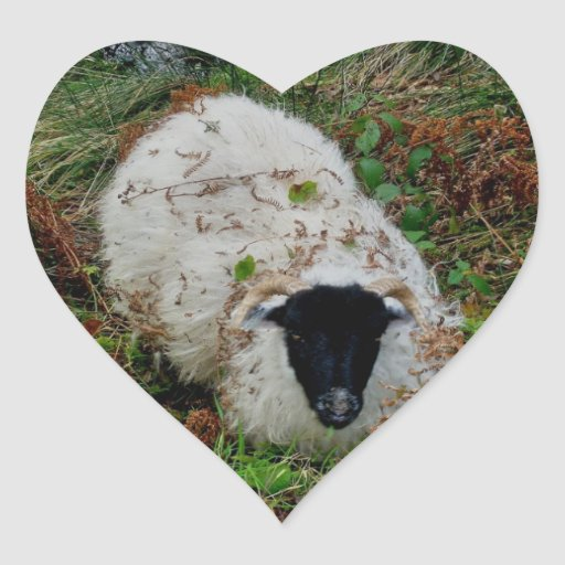Ovejas de Dartmoor en Hideing Pegatina Corazón