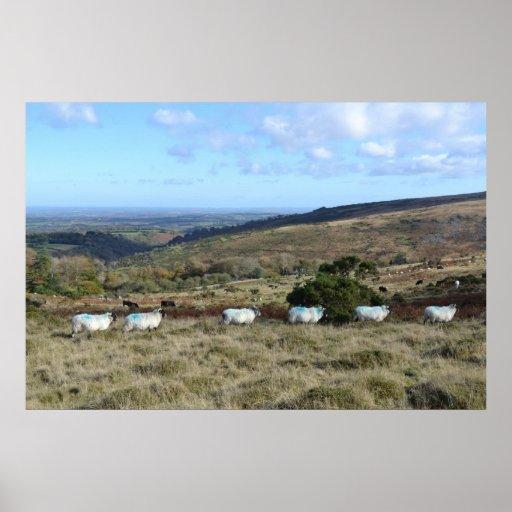 Ovejas de Dartmoor Poster