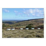 Ovejas de Dartmoor Tarjeta