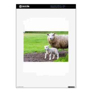 Ovejas de la madre y cordero recién nacido en iPad 2 calcomanía