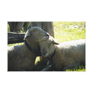 Ovejas de la oveja del amor impresión en lienzo