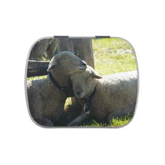 Ovejas de la oveja del amor latas de dulces