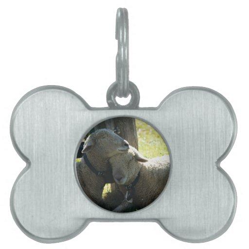 Ovejas de la oveja del amor placas de nombre de mascota