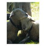 Ovejas de la oveja del amor membrete personalizado