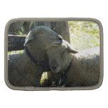 Ovejas de la oveja del amor organizadores