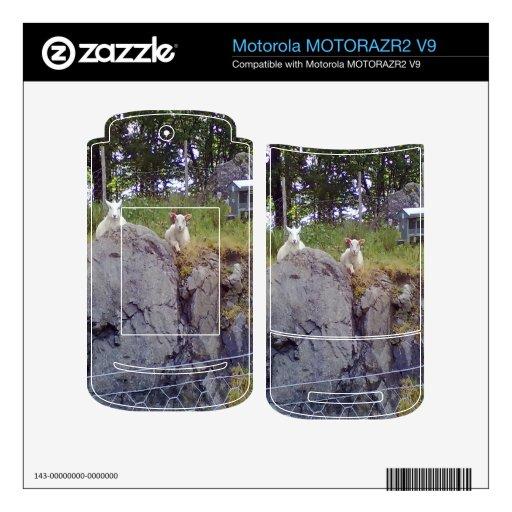 Ovejas de localización y permanentes MOTORAZR2 v9 skin