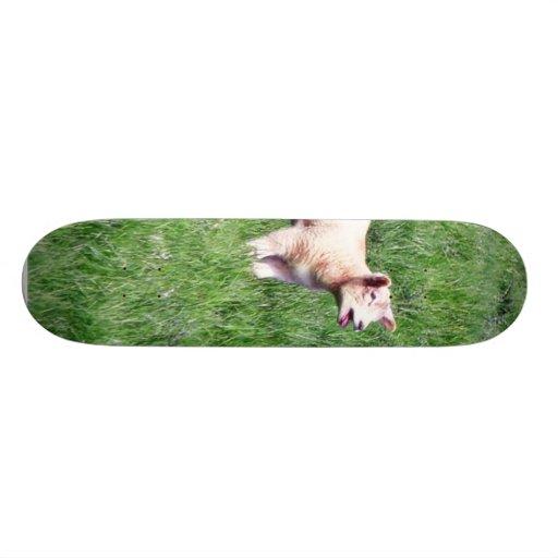 Ovejas de los corderos patineta personalizada