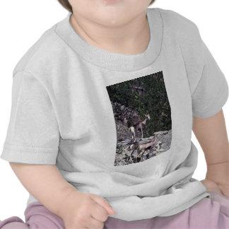 Ovejas de piedra (ovejas) camiseta