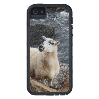 Ovejas del sur de la costa de Devon en la mirada iPhone 5 Case-Mate Coberturas