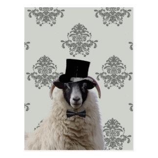 Ovejas divertidas del novio en sombrero de copa postal