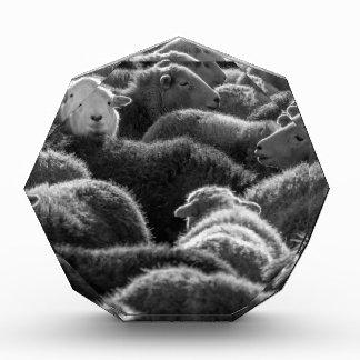 Ovejas en blanco y negro