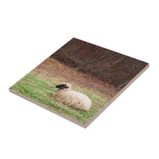 Ovejas en el prado - fotografía de la naturaleza d azulejo cuadrado pequeño