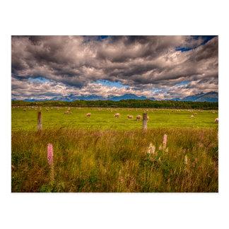 Ovejas en Fiordland, Te Anau, Nueva Zelanda Postales