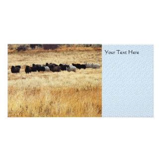 Ovejas en hierba seca tarjetas fotográficas personalizadas