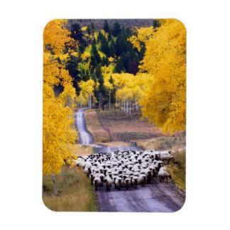Ovejas en la carretera nacional imanes de vinilo