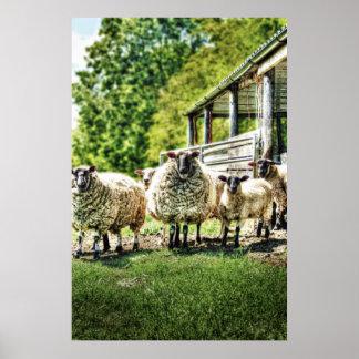 Ovejas en la impresión de la granja poster