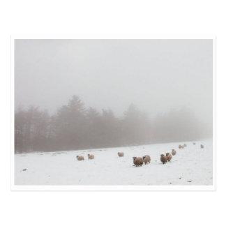Ovejas en la niebla tarjetas postales