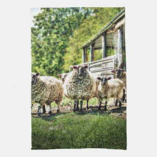 Ovejas en la toalla de té de la cocina de la granj