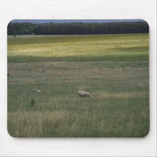 Ovejas en un cojín de ratón de campo tapete de ratón