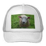 Ovejas escocesas lindas gorras de camionero