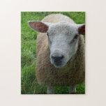 Ovejas escocesas lindas puzzles con fotos